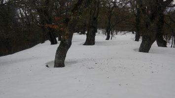 Foto de bosque de robles