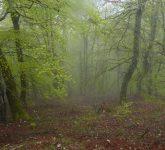 Ruta de senderismo en Potes. Las hayas sobresalen en la niebla en la excursión quye hicimos hoy saliendo de Cahecho en dirección a la Virgen de la Luz